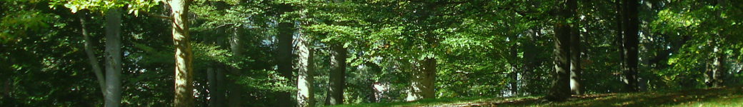 Skogsgläntan